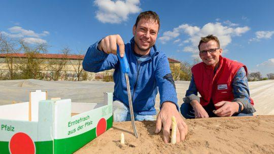 Pfalzmarkt Start Spargelsaison 2019