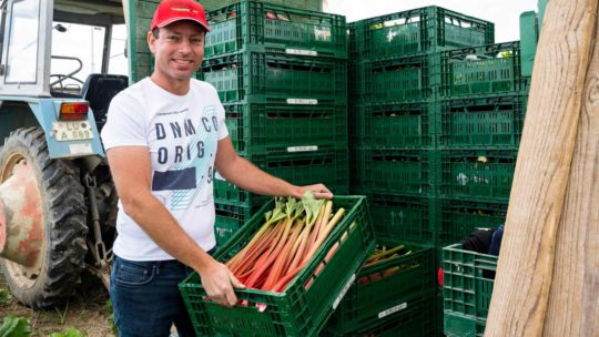 Pfalzmarkt Erntefrisch aus der Pfalz ist gefragt