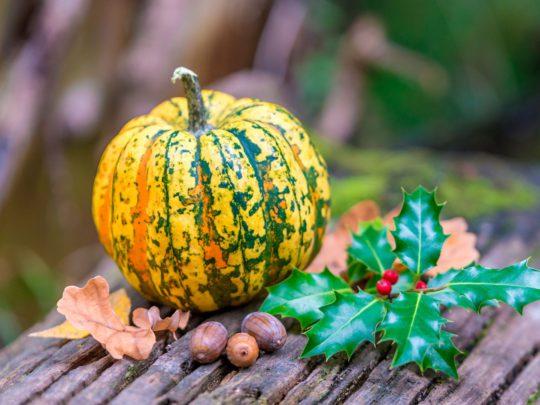 Chameleon pumpkin