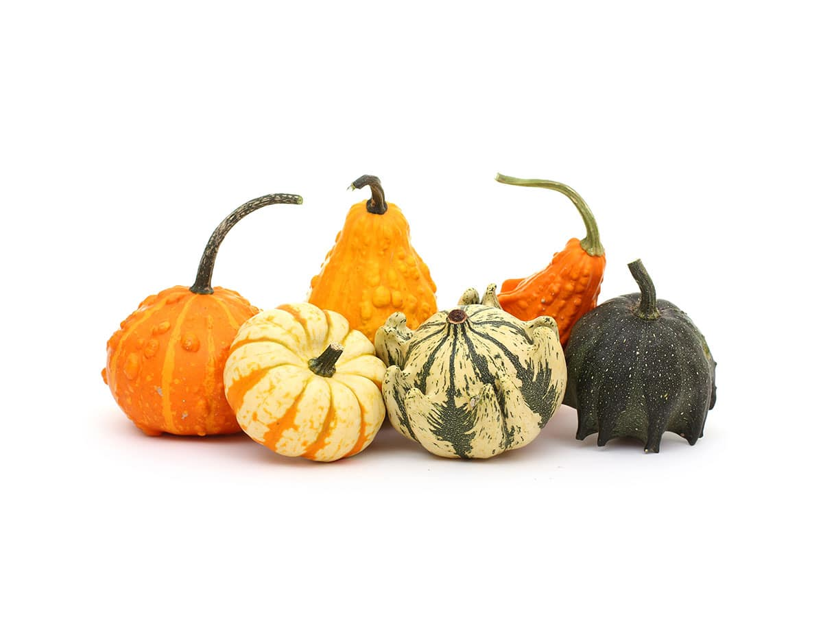 Ornamental pumpkin mix