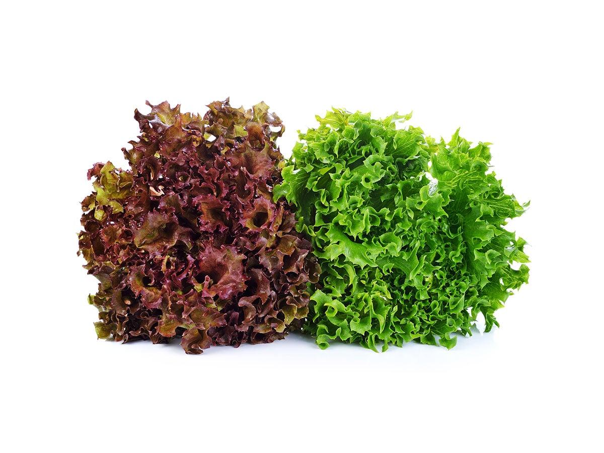 Lollo lettuces