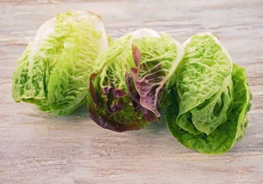 Mini romaine lettuce