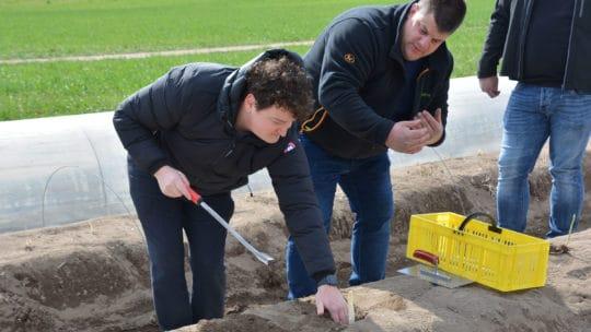 Benjamin Peifer und Michael Ohmer stechen Spargel in Rheinzabern 2021