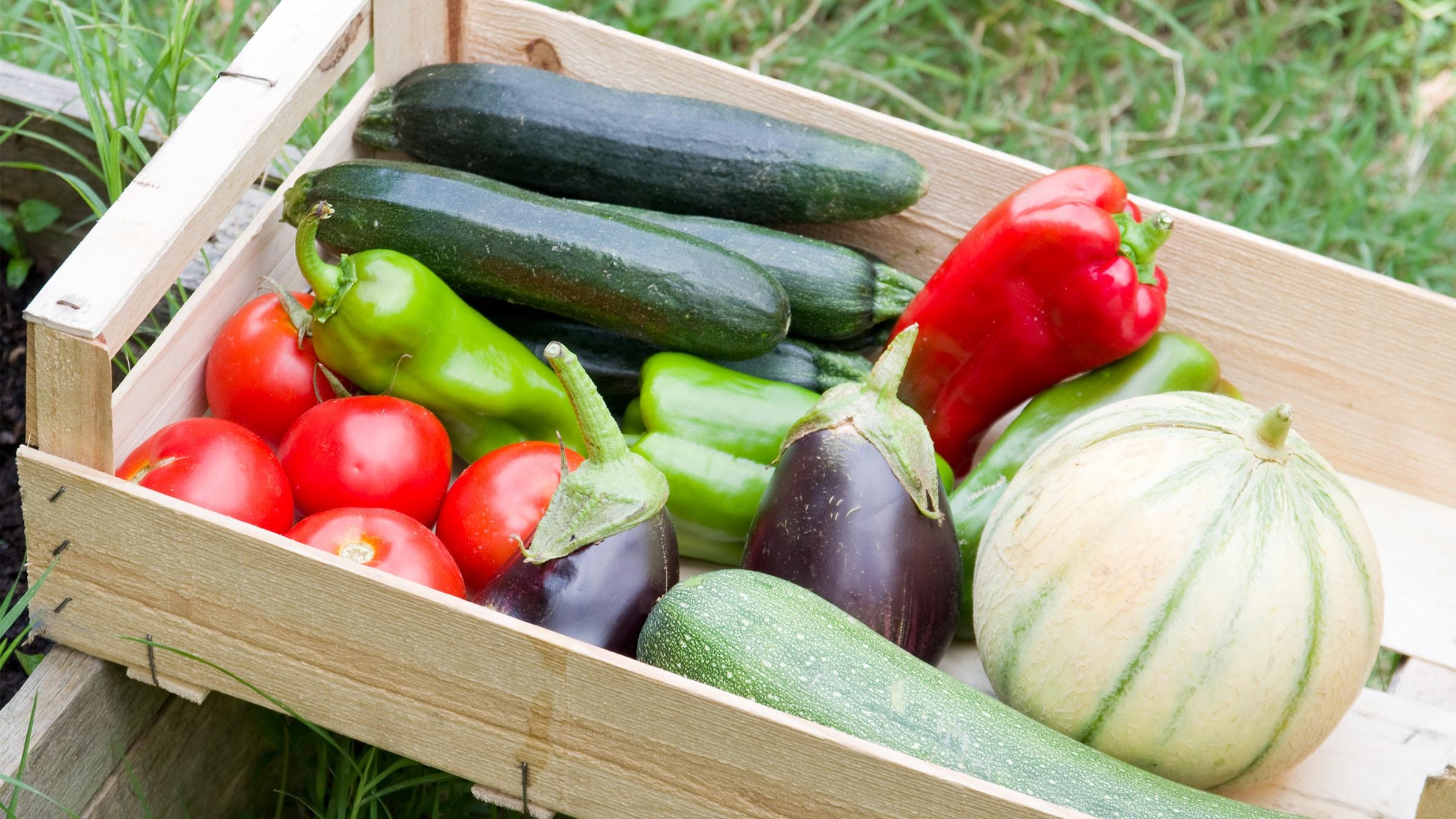 tomaten, gurken, kürbis, paprika